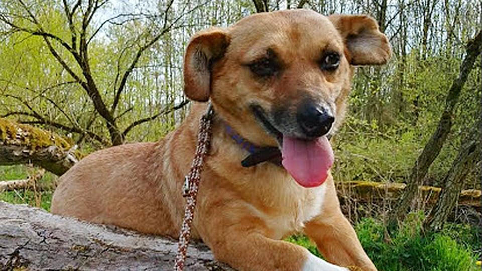Mila: Scheuer Hund mausert sich zu tollem Begleiter