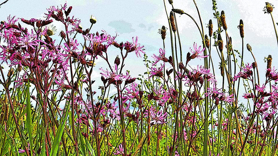 Projektstart: Wildbienen-Netzwerk-Agrarlandschaft